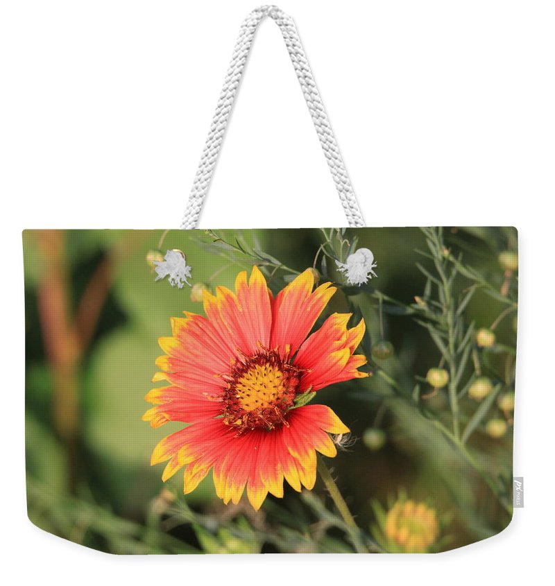 Indian Weekender Tote Bag featuring the photograph Indian Blanket Flower by Andrew Dyer Photography