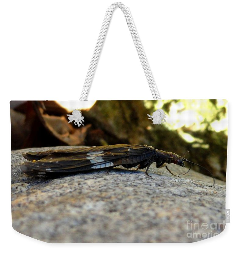 Insect Weekender Tote Bag featuring the photograph Insect Stripes by Meandering Photography