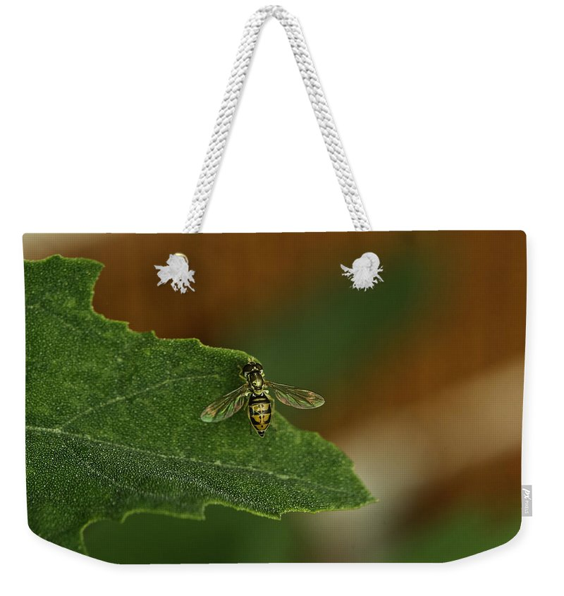 Iridescent Weekender Tote Bag featuring the photograph Iridescent Fly 1 by Douglas Barnett