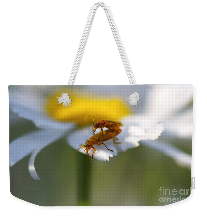 Bugs Weekender Tote Bag featuring the photograph It Takes Two by Sharon Talson