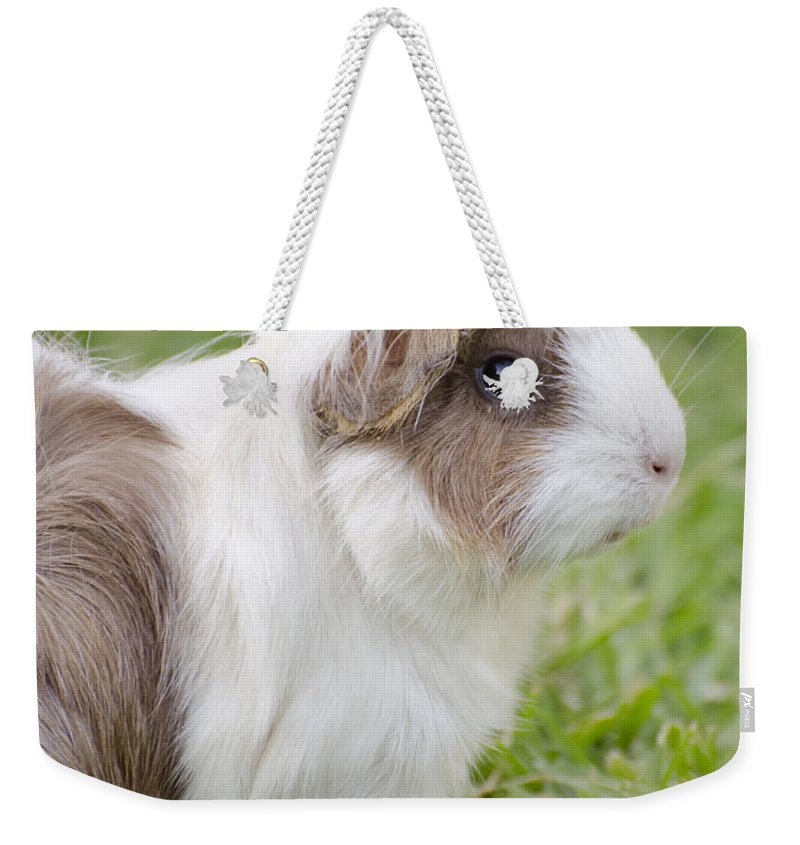 Guinea Pig Weekender Tote Bag featuring the photograph It Was My Punk Phase by Jim And Emily Bush