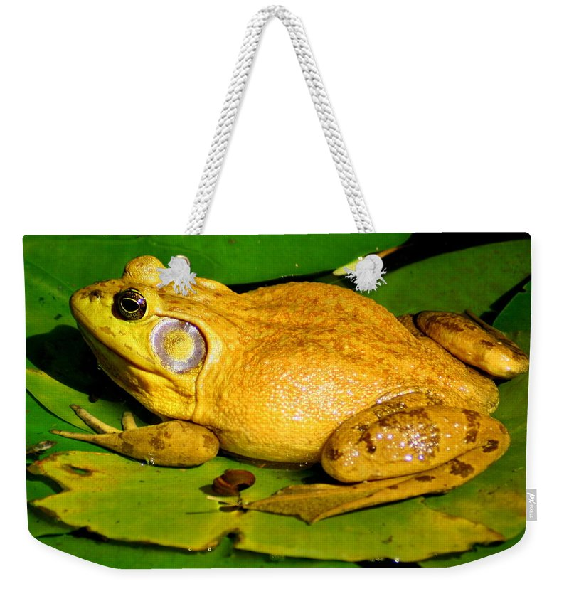 American Bullfrog Weekender Tote Bag featuring the photograph Its My Pad by Laurel Talabere