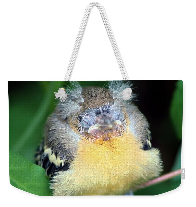 Baby Birds Weekender Tote Bag featuring the photograph It's Nap Time by Smilin Eyes Treasures