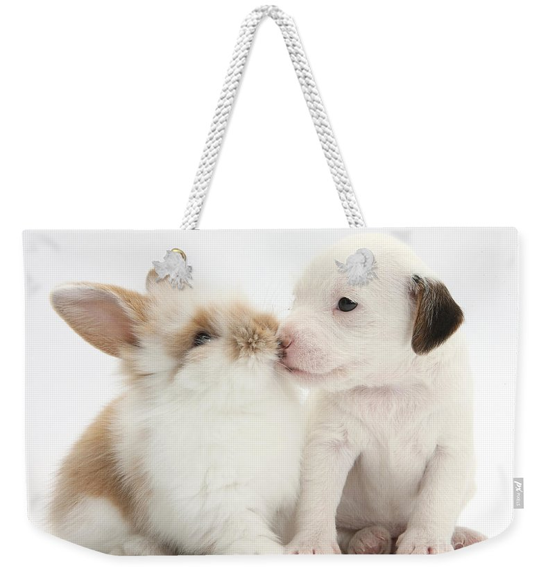 Jack Russell Terrier Weekender Tote Bag featuring the photograph Jack Russell Terrier Puppy And Baby by Mark Taylor