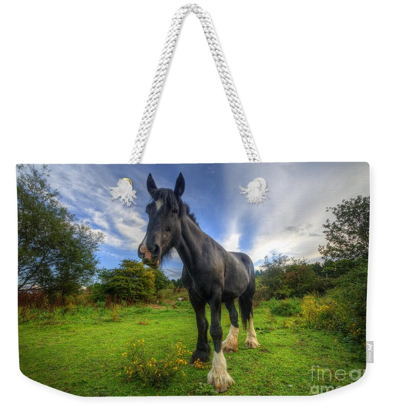 Shire Horse Weekender Tote Bag featuring the photograph Jeany by Yhun Suarez