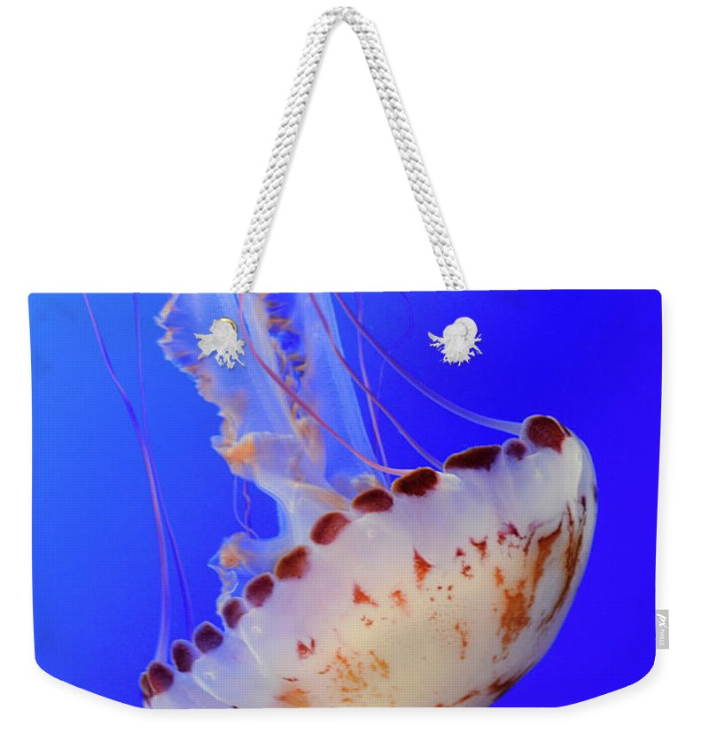 Jellyfish Weekender Tote Bag featuring the photograph Jellyfish 4 by Bob Christopher