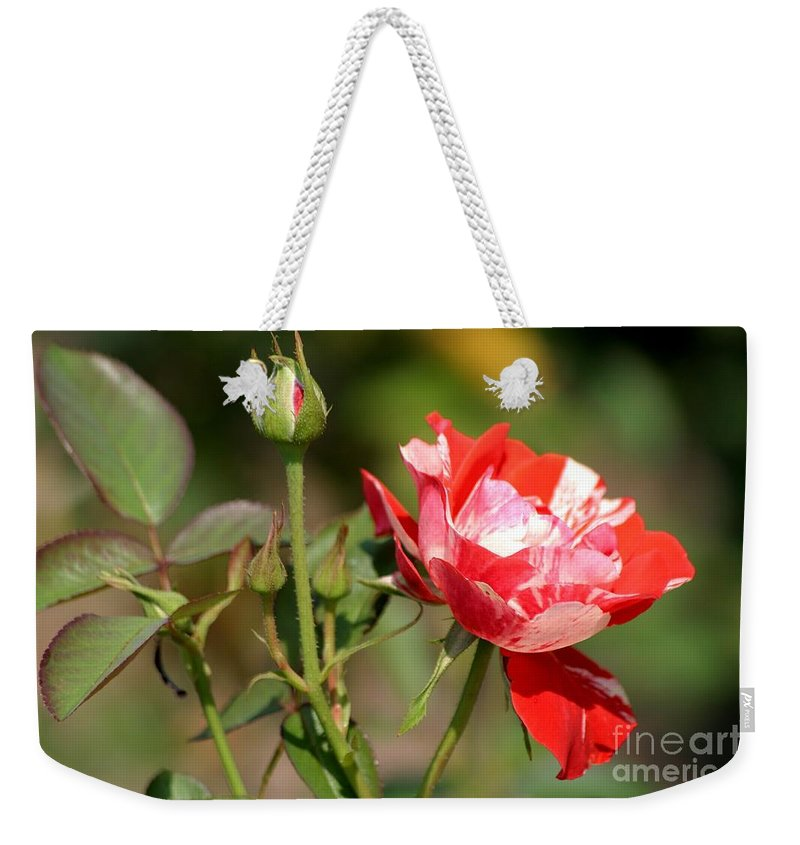 Rose Weekender Tote Bag featuring the photograph Jh Pierneef Rose by Living Color Photography Lorraine Lynch