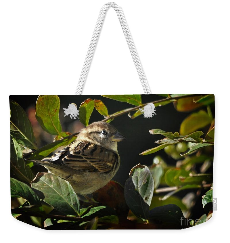 Nature Weekender Tote Bag featuring the photograph Junior Sparrow by Nava Thompson