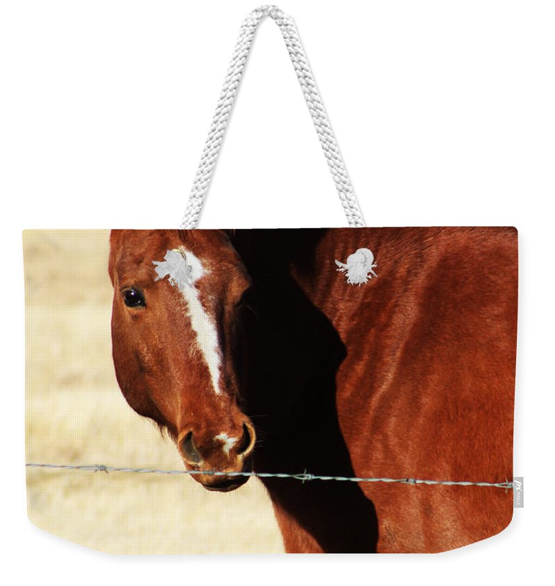 Alberta Weekender Tote Bag featuring the photograph Just Me And My Shadow by Alyce Taylor