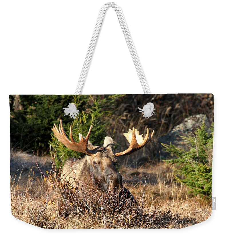 Doug Lloyd Weekender Tote Bag featuring the photograph Just Resting by Doug Lloyd