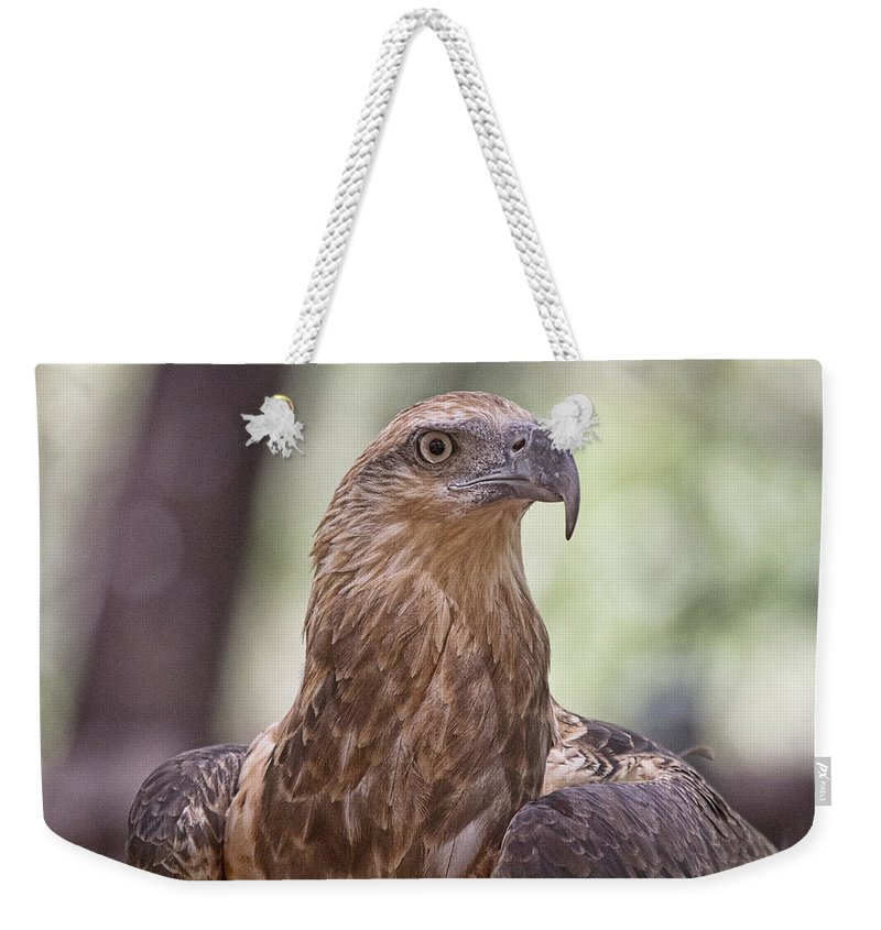 Juvenile Weekender Tote Bag featuring the photograph Juvenile Sea Eagle by Douglas Barnard