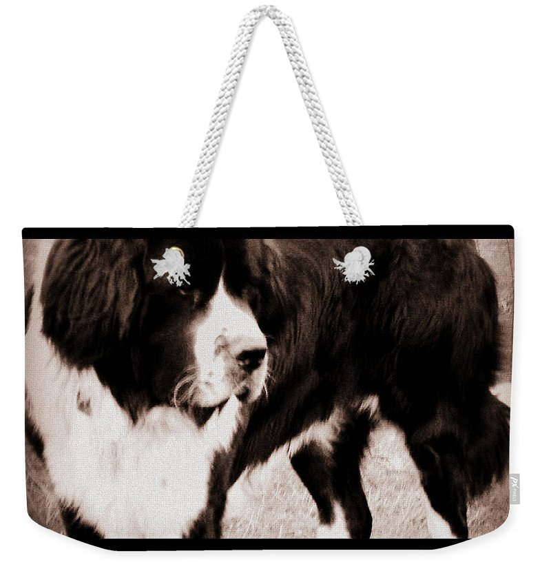 Dog Weekender Tote Bag featuring the photograph Keeper Of The Yard by Kathy Sampson
