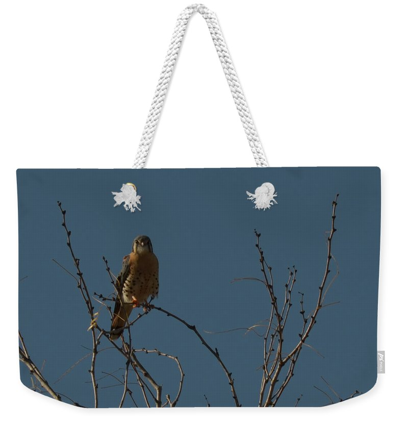 Bird Weekender Tote Bag featuring the photograph Kestrel by Donna Brown