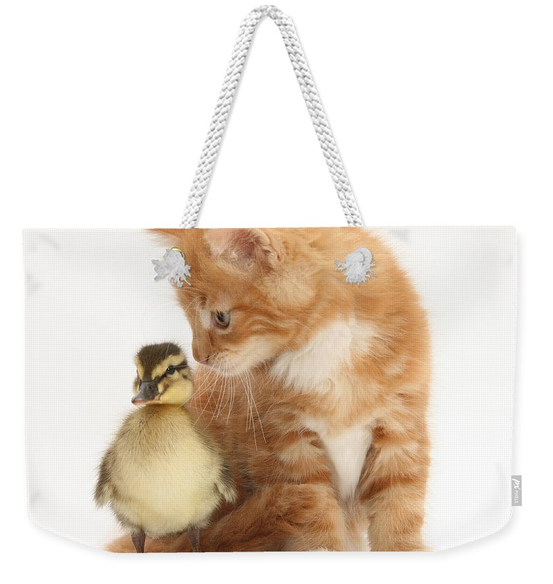 Animal Weekender Tote Bag featuring the photograph Kitten And Duckling by Mark Taylor