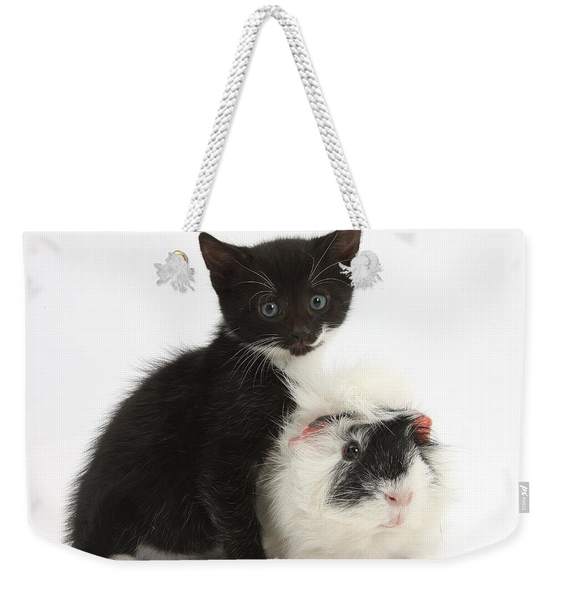 Nature Weekender Tote Bag featuring the photograph Kitten And Guinea Pig by Mark Taylor