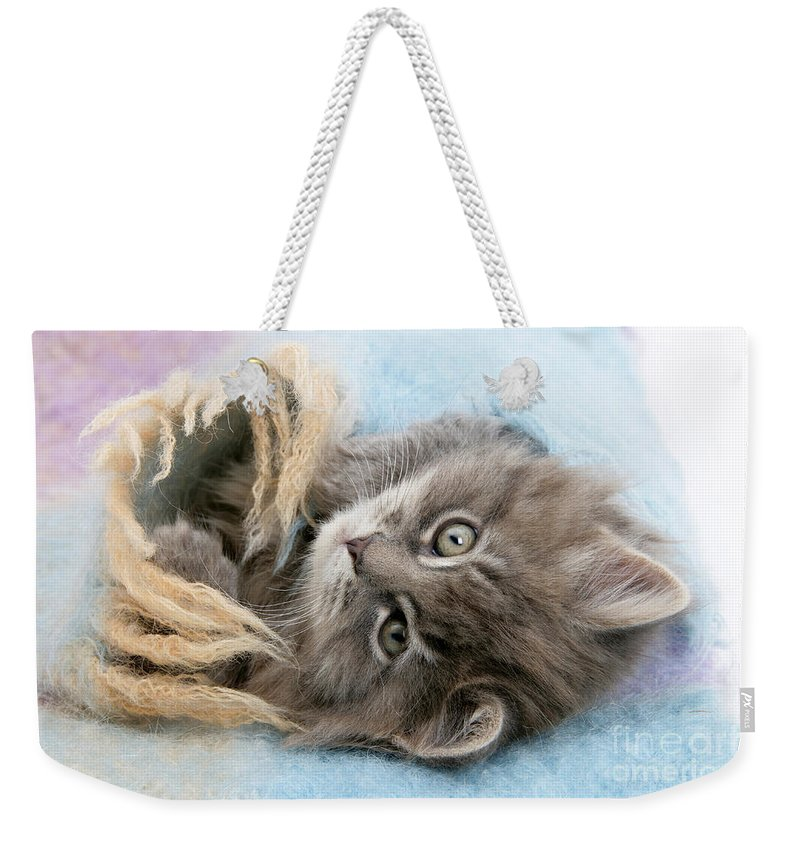 Animal Weekender Tote Bag featuring the photograph Kitten In Blanket by Mark Taylor