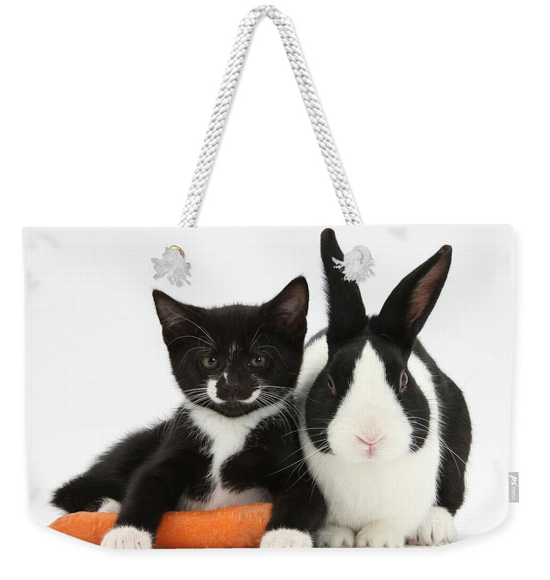 Nature Weekender Tote Bag featuring the photograph Kitten, Rabbit And Carrot by Mark Taylor
