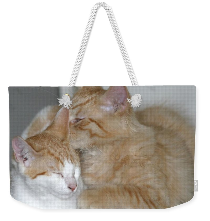 Cat Weekender Tote Bag featuring the photograph Kitty Kat Secrets by Living Color Photography Lorraine Lynch