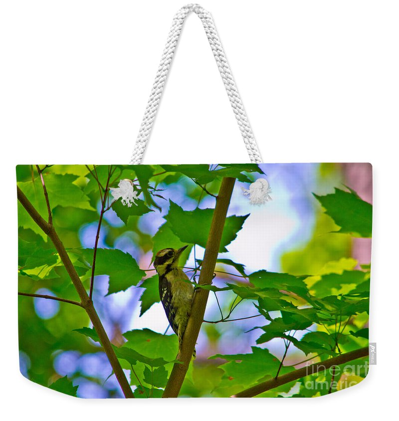 Scott Weekender Tote Bag featuring the photograph Knock Knock by Scott Hervieux