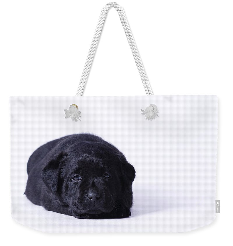 Animal Weekender Tote Bag featuring the photograph Lab Puppy by Waldek Dabrowski