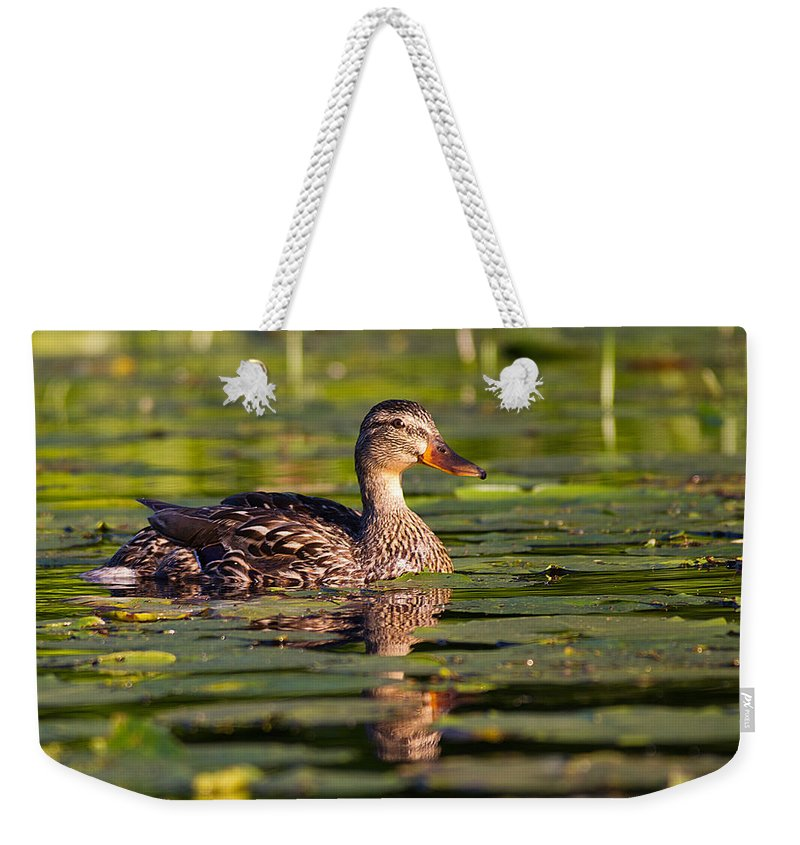 Duck Weekender Tote Bag featuring the photograph Lady Duck 1 by Dan Wells