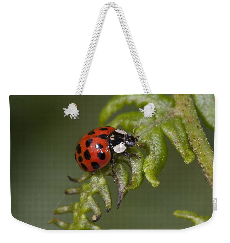 Coleoptera Weekender Tote Bag featuring the photograph Ladybug by Bob Kemp