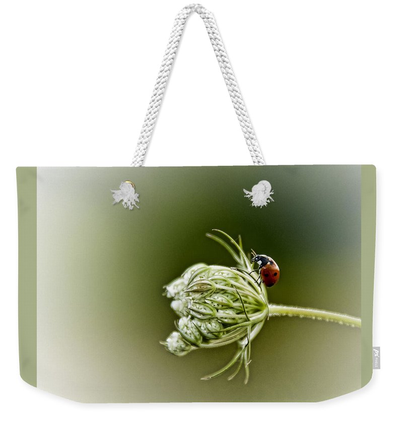 Queen Anne's Lace Weekender Tote Bag featuring the photograph Ladybug Ladybug Fly Away Home by Linda Clifford
