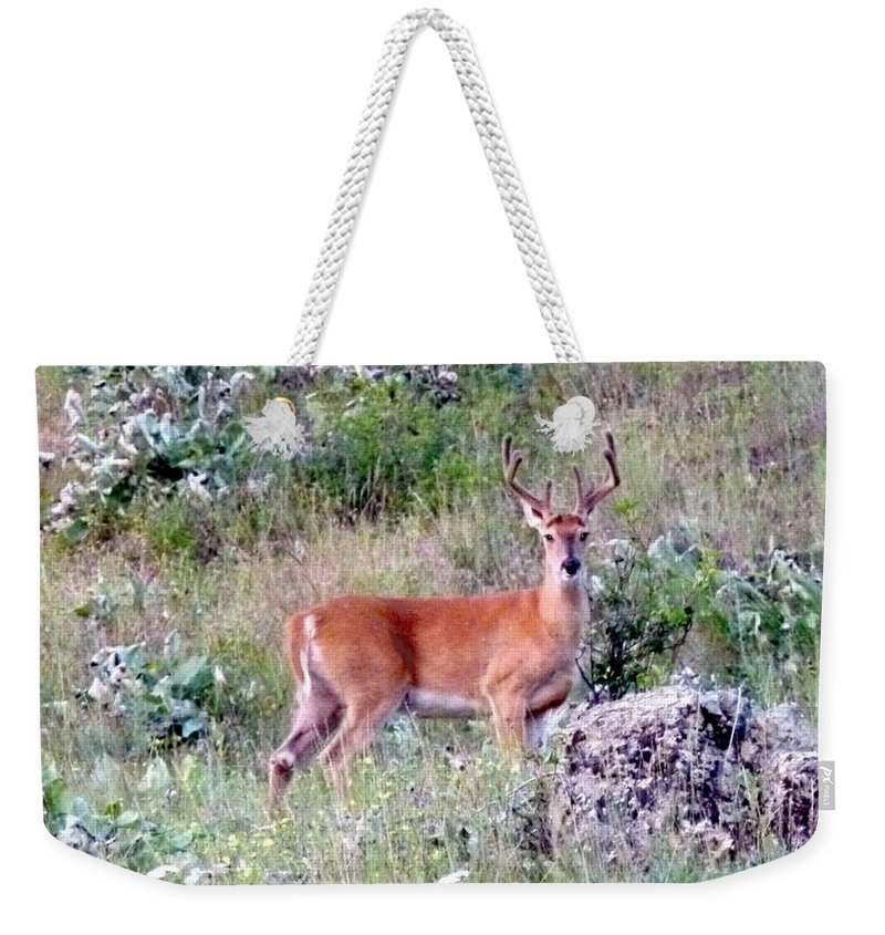 Deer Weekender Tote Bag featuring the photograph Lake Country Buck by Will Borden
