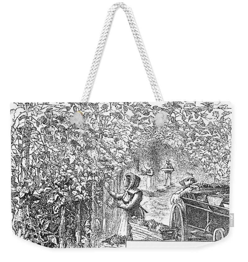 1873 Weekender Tote Bag featuring the photograph Lake Erie: Vineyard, 1873 by Granger