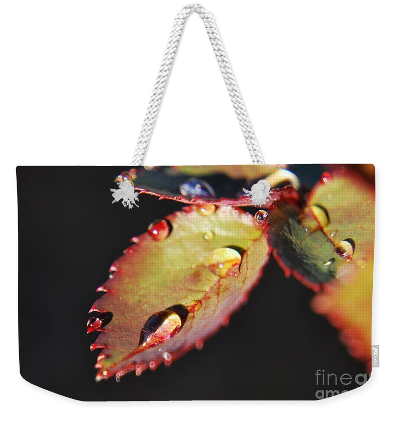 Yhun Suarez Weekender Tote Bag featuring the photograph Leaf And Dew Drops by Yhun Suarez