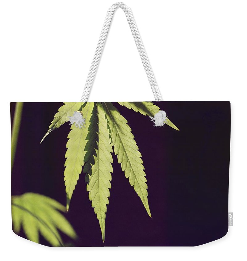 United States Weekender Tote Bag featuring the photograph Leaves Of A Marijuana Plant Cannabis by Todd Gipstein