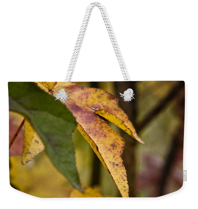 Fall Weekender Tote Bag featuring the photograph Leaves Of Fall by Kacy Taylor