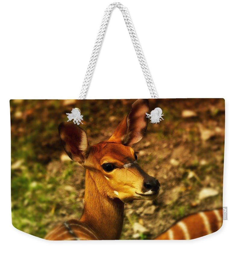 Lesser Kudu Weekender Tote Bag featuring the photograph Lesser Kudu by Linda Tiepelman