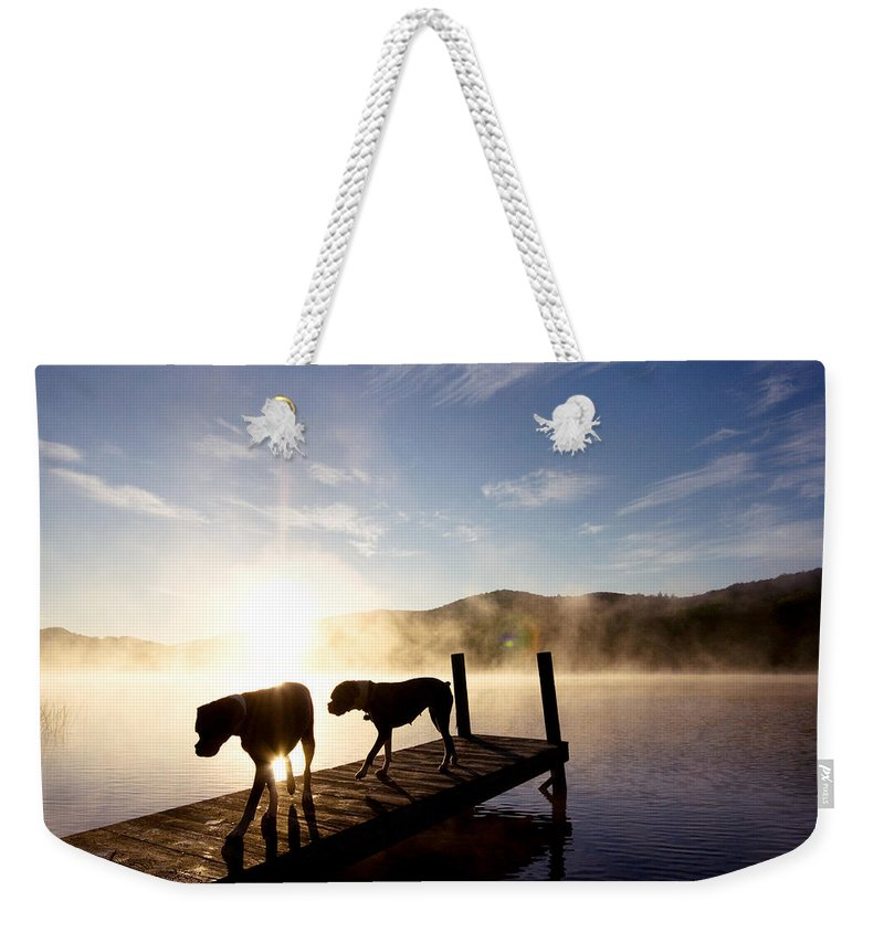 Weekender Tote Bag featuring the photograph Light Of My Life Boxer Dogs On Dock by Stephanie McDowell