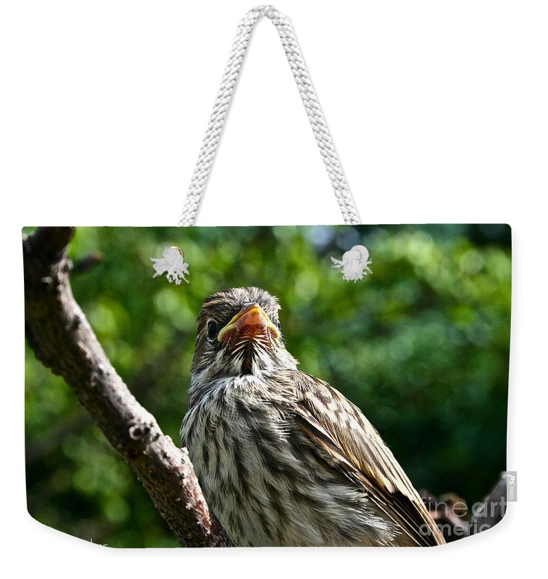 Bird Weekender Tote Bag featuring the photograph Lil Peeper by Susan Herber