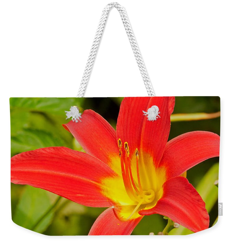 Lilly Weekender Tote Bag featuring the photograph Lilly by Paul Mangold