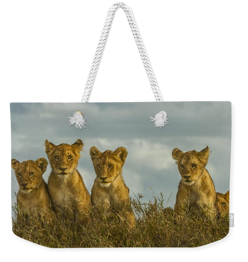 Serengeti National Park Weekender Tote Bag featuring the photograph Lion Cubs Serengeti National Park by Boyd Norton
