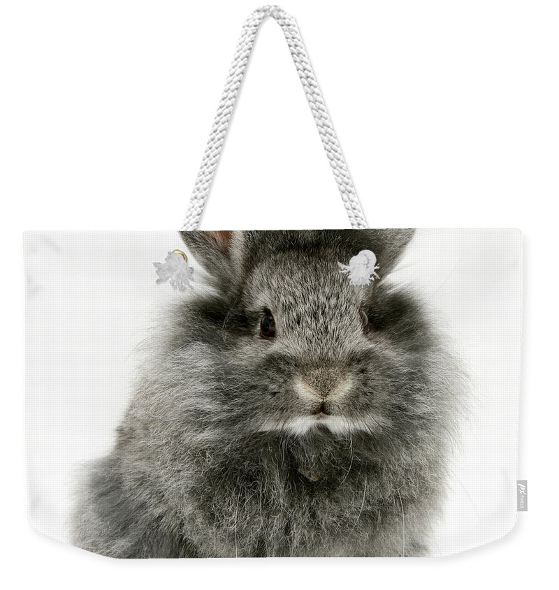 Animal Weekender Tote Bag featuring the photograph Lionhead Rabbit by Jane Burton