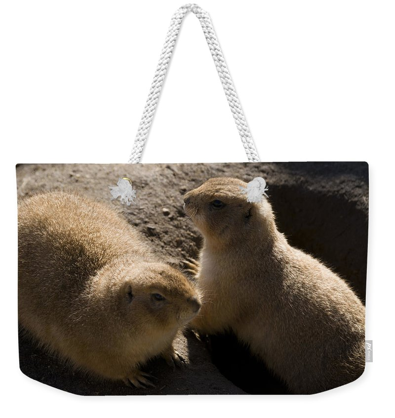 Prairie Dog Weekender Tote Bag featuring the photograph Little Dogs On The Prairie by Trish Tritz