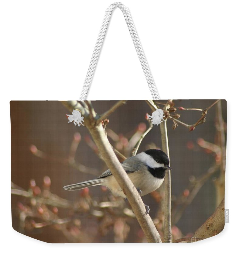Birds Weekender Tote Bag featuring the photograph Little One by Living Color Photography Lorraine Lynch
