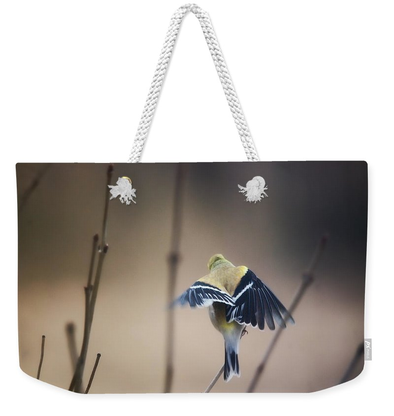 Designs Similar to Little Wings by Sue Capuano