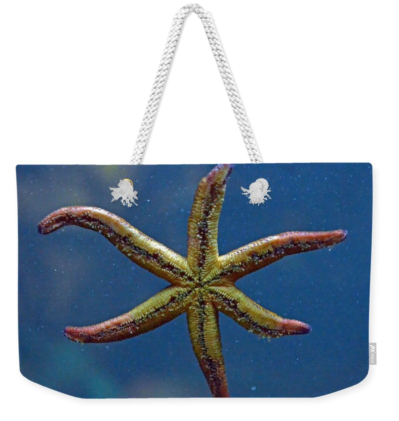 Starfish Weekender Tote Bag featuring the photograph Live Starfish by Sandi OReilly