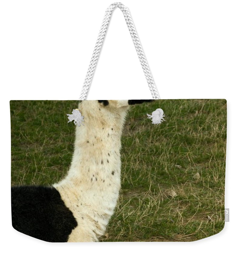 Llama Weekender Tote Bag featuring the photograph Llama Portrait by Sally Weigand