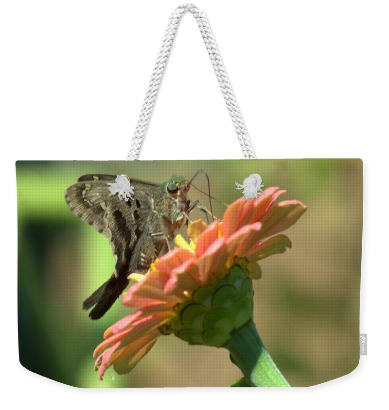 Insect Weekender Tote Bag featuring the photograph Long Tailed Skipper Butterfly by Donna Brown