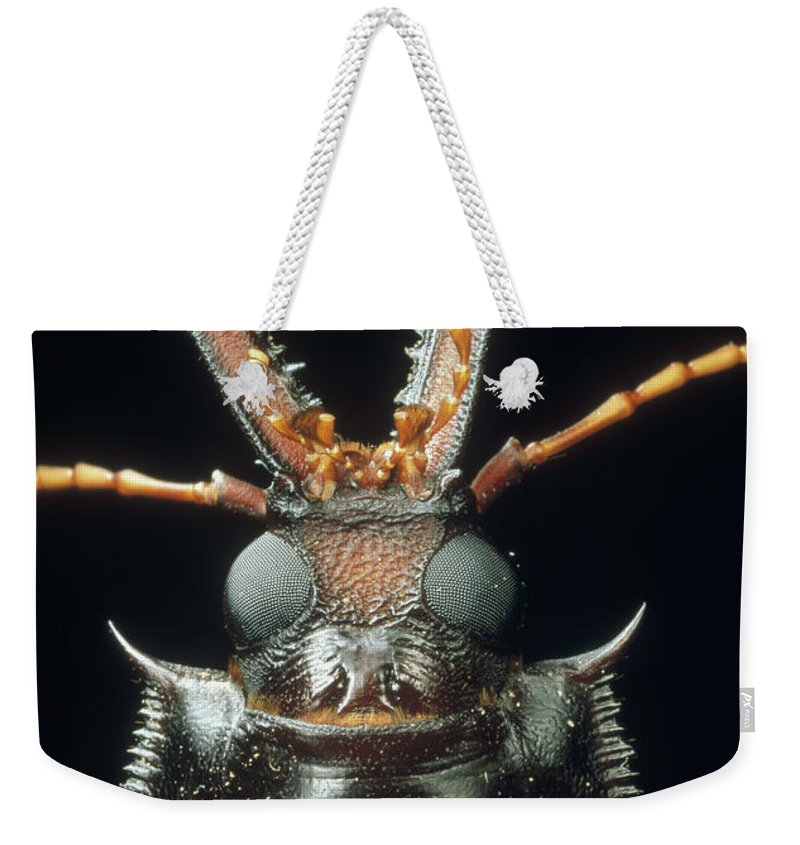 Mp Weekender Tote Bag featuring the photograph Longhorn Beetle Macrodontia Cervicornis by Mark Moffett