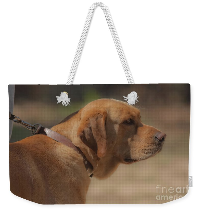 Dogs Weekender Tote Bag featuring the mixed media Longing by Kim Henderson