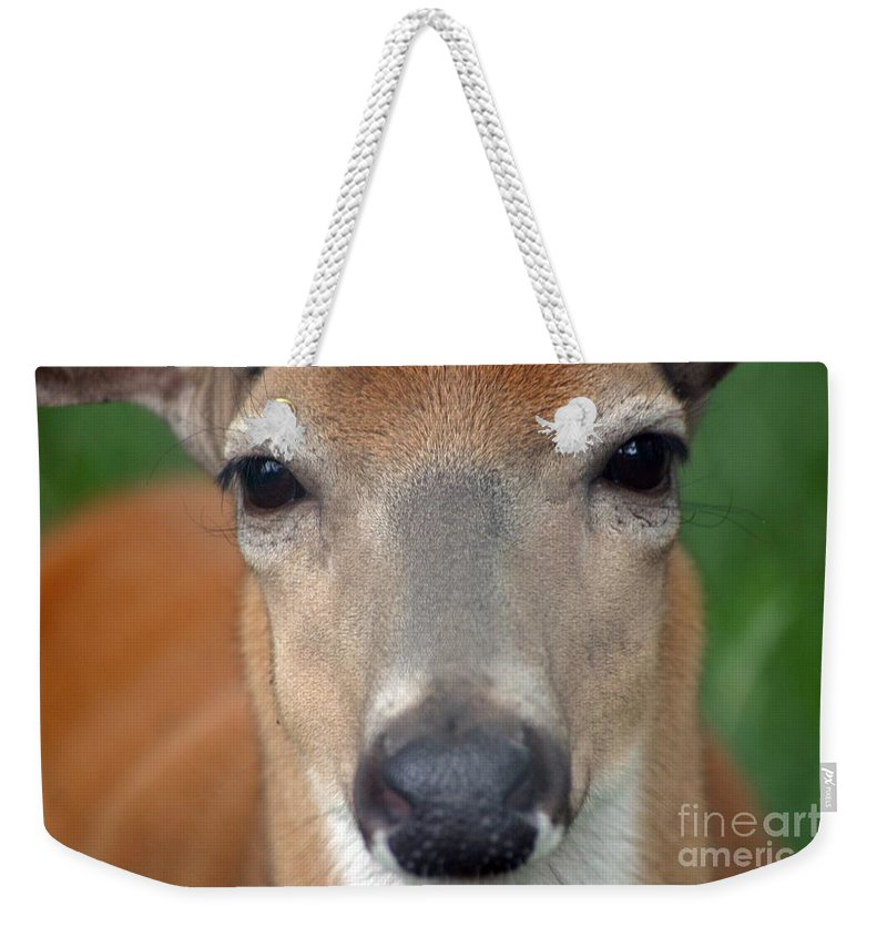 Deer Weekender Tote Bag featuring the photograph Look Into My Eyes by Living Color Photography Lorraine Lynch