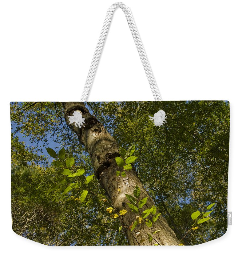 Woods Weekender Tote Bag featuring the photograph Looking Up At A Tree Trunk by Todd Gipstein