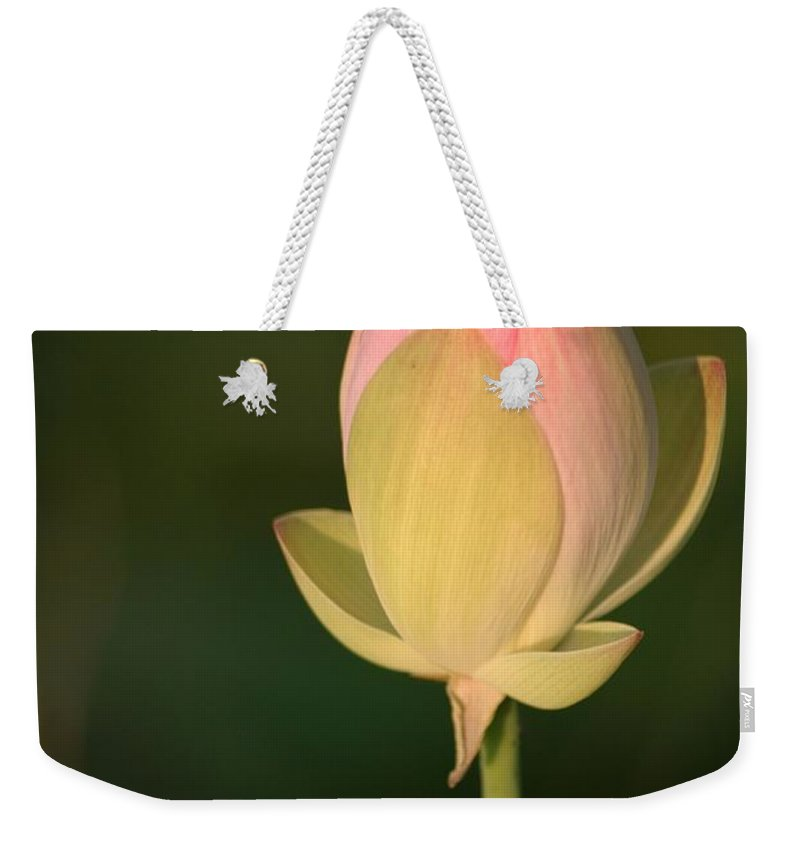 Lotus Weekender Tote Bag featuring the photograph Lotus Bud by Living Color Photography Lorraine Lynch