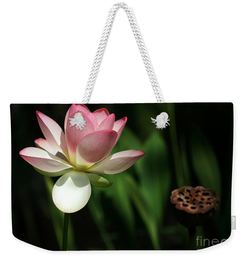 Landscape Weekender Tote Bag featuring the photograph Lotus Opening To The Sun by Sabrina L Ryan